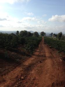 Kaffe_Tanzania_2